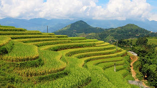 Rice Field in Hoang Su Phi