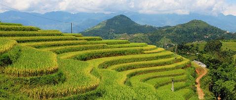 hoang-su-phi-rice-fields.JPG