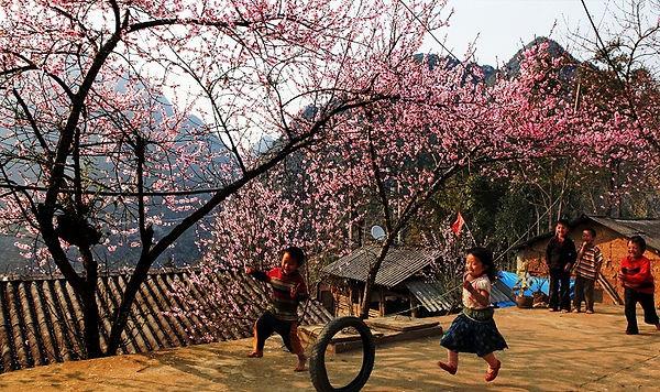 to day flowers in La Pan Tan.jpg