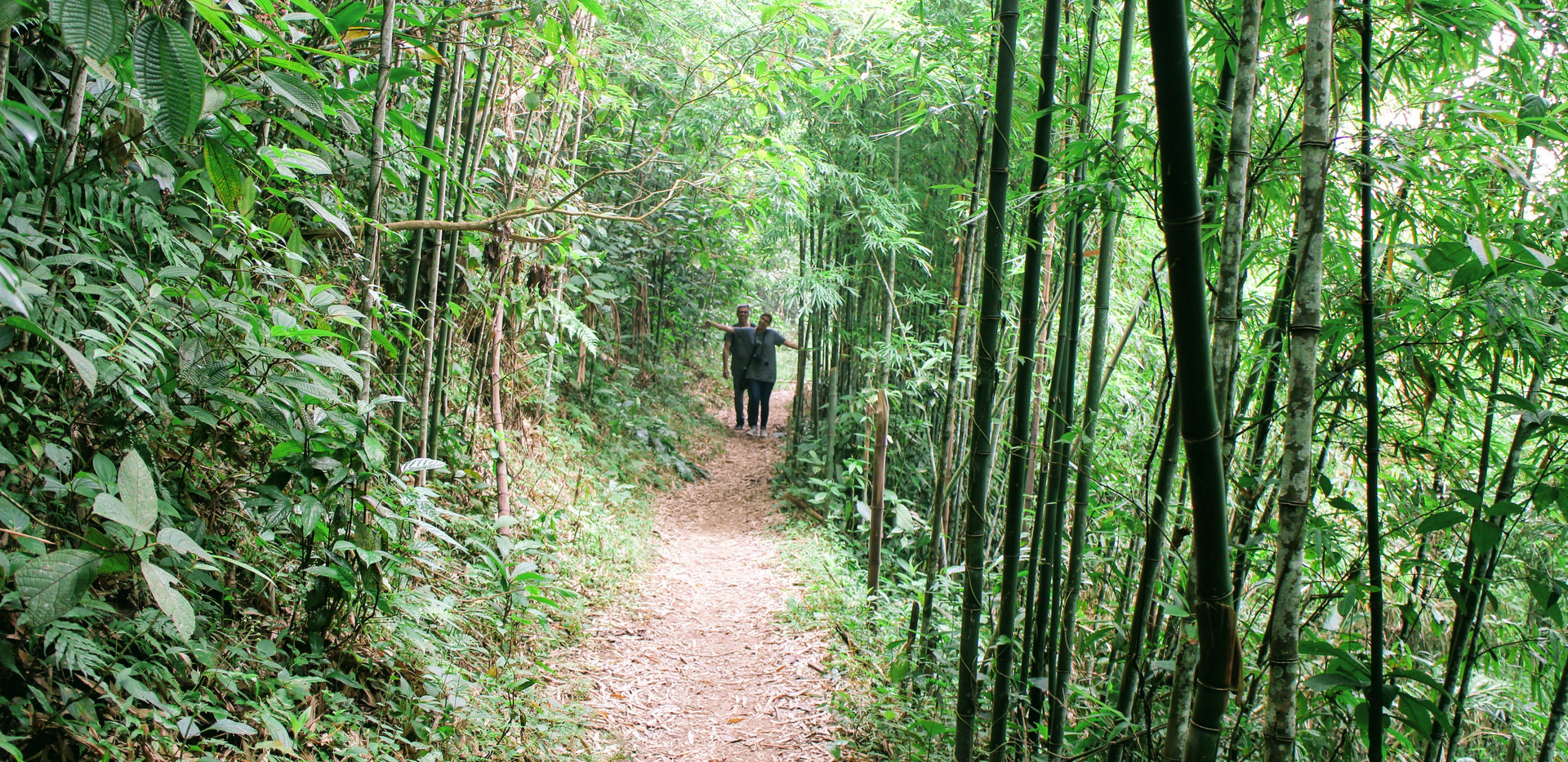 Trekking the bamboo forest in Sapa