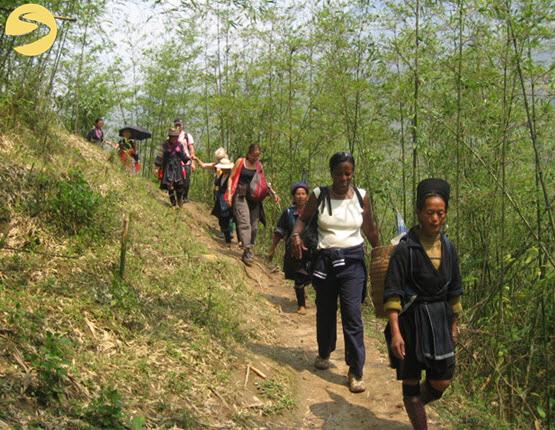 Trek through a bamboo forest