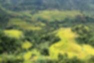 Hoang Su Phi Terraces