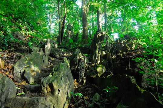 trekking-in-cuc-phuong.jpg