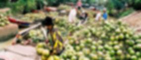 Ben Tre Coconut fruits