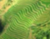 very-green-sapa.jpg