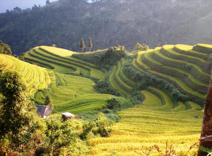 Yellow Hoang Su Phi