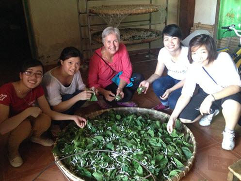 Feeding the silk worm