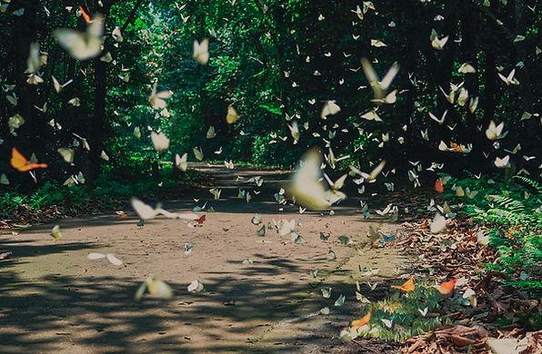 Ninh Binh Travel Guide butterfly in cuc phuong national park.jp