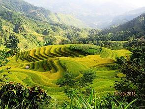Hoang Su Phi Rice