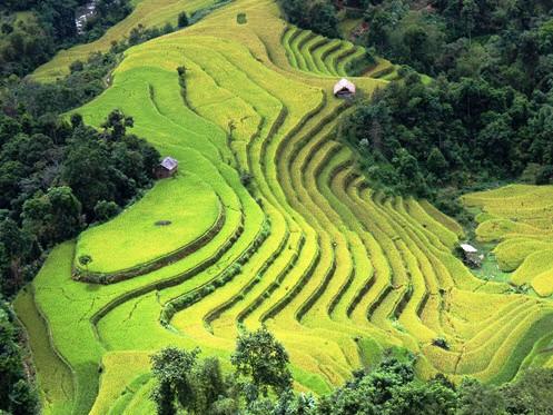Hoang Su Phi Rice Terraces