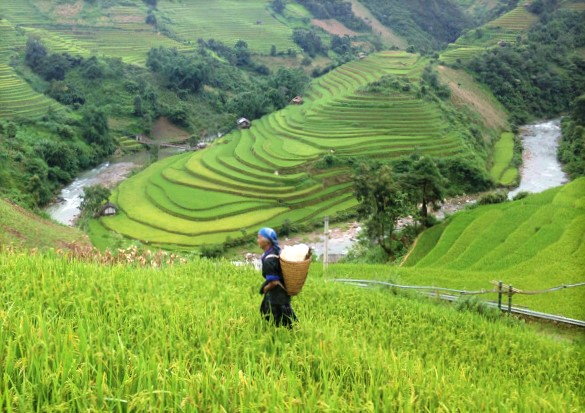 Hmong lady walking in the field