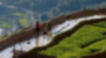 Hoang Su Phi 2.jpg