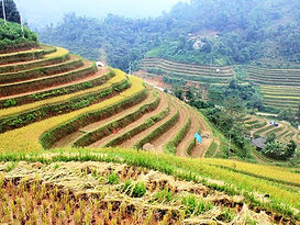 Ha Giang Rice fields