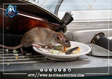 تتميز شركتنا بعمالة مدربة علي اعلي مستوي في مجال مكافحة الفئران والقوارض وابادتها نهائياً