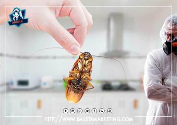 رش صراصير بتبوك باقوي مبيدات الصراصير العالمية لضمان ابادة تامة للصراصير