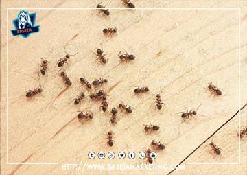 نقوم بالقضاء علي جحور النمل واماكن تكاثره باقوي مبيدات النمل العالمية