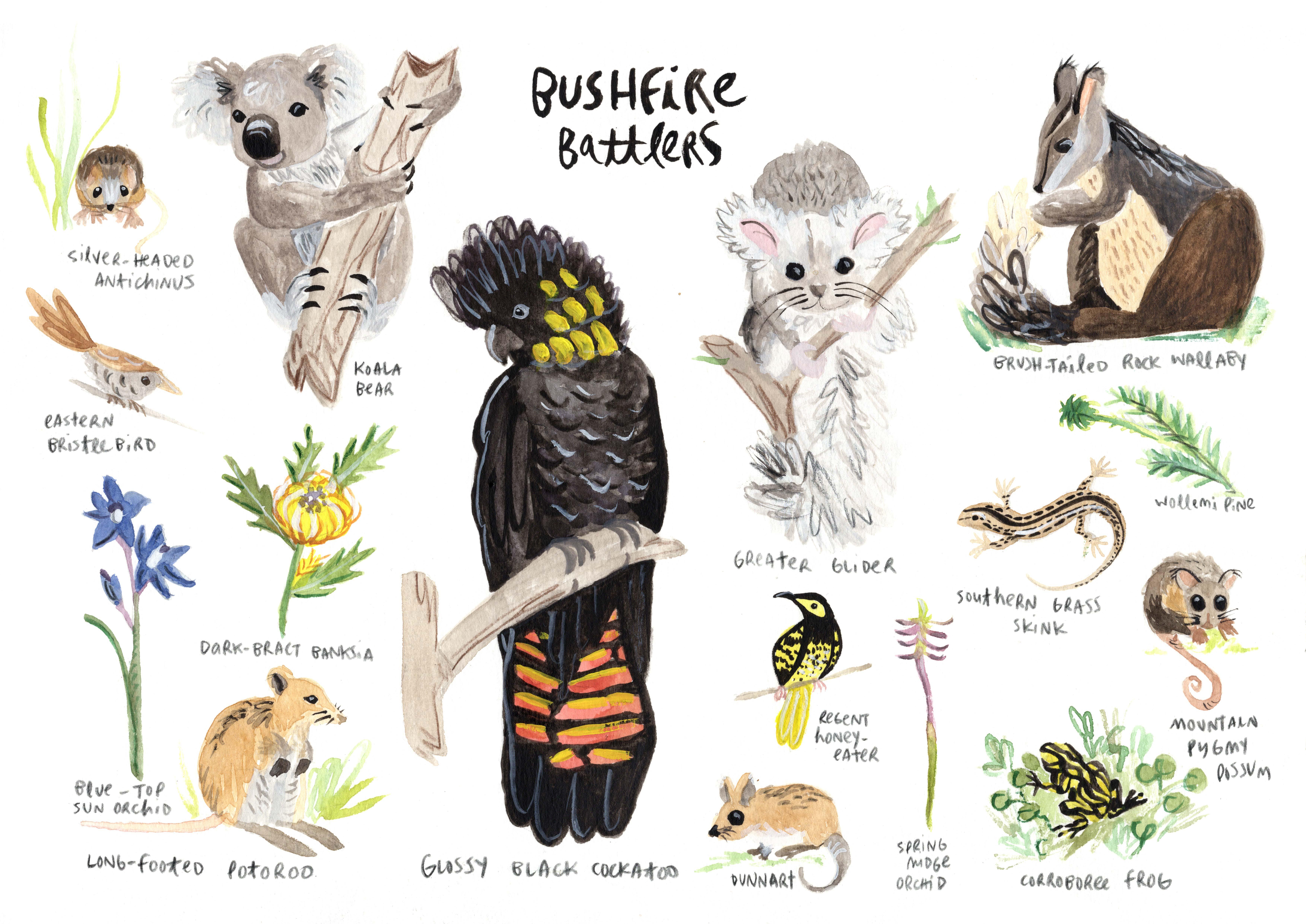 Bushfire Battlers