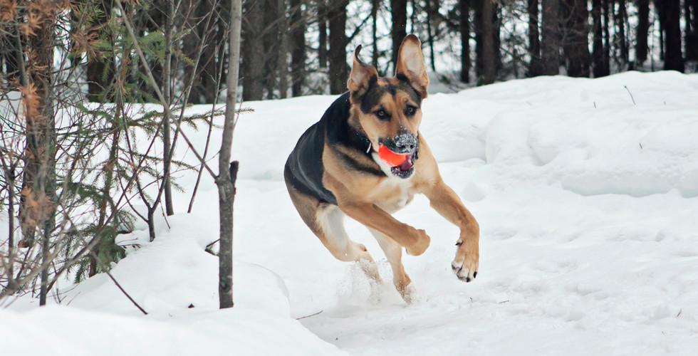 Riley Running.jpg