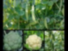 Brocoli - Cucs.jpg