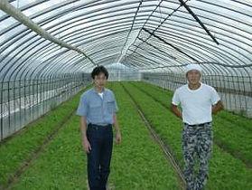 滋賀県産水菜 横江さん