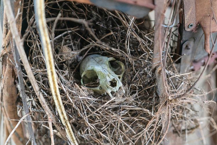 Nicole_Schoepflin_nature_cat_skull.jpg