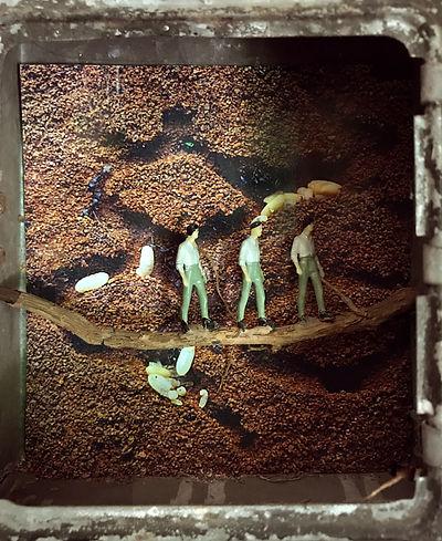 Nicole_Schoepflin_nature_underground_earth_ants_eggs_workers_soil.jpg