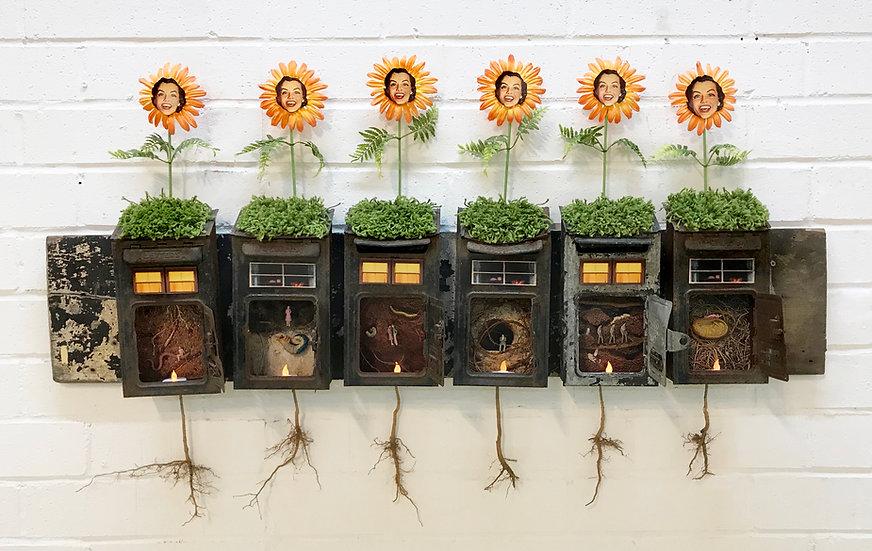 Nicole_Schoepflin_nature_underground_earth_sunflower2.jpg