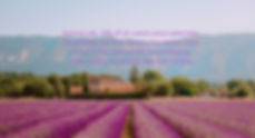 Lavender-Fields-Provence-South-of-France