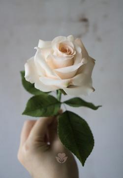Sugar Rose Petals by You