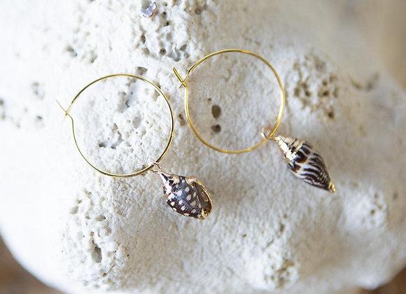 Shell Earrings - Brown