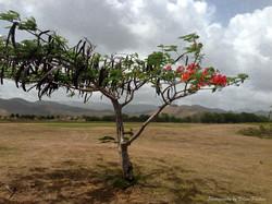 Flowering Tree 1.jpg