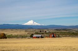 Mt Adams from Oregon