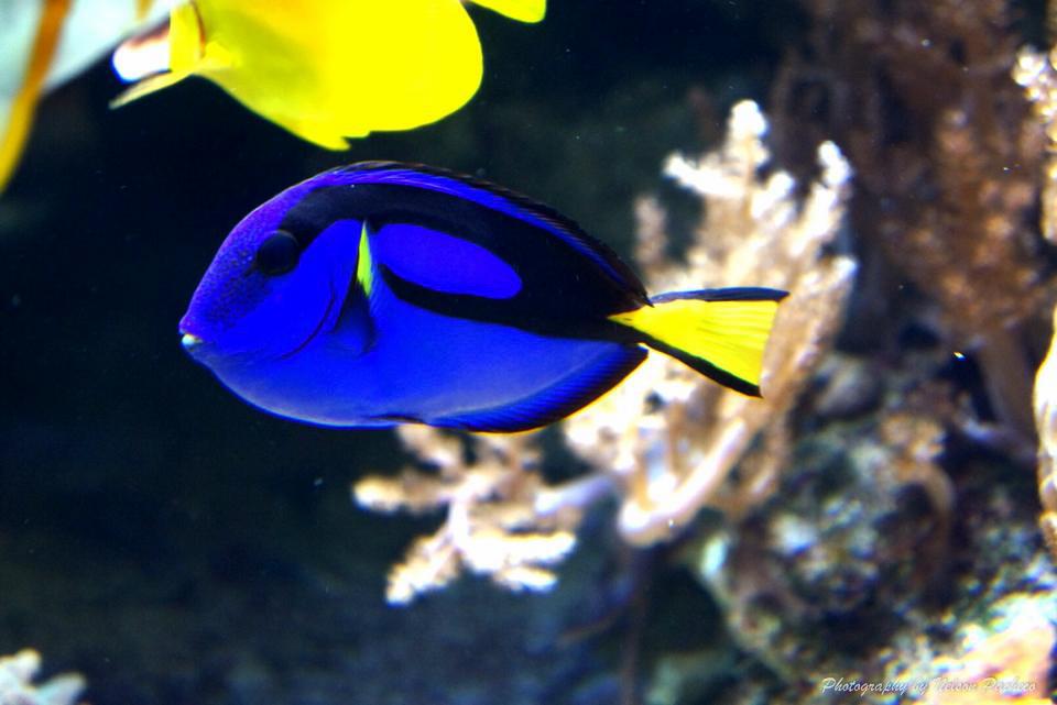 TropicalFish.jpg