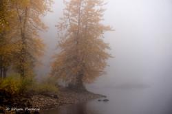 Foggy Oregon Lake