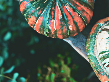 The Benefits of Pumpkin For Your Feline