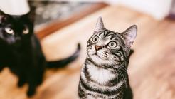 Feline Enrichment Explained