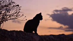 Autumn Equinox & How It Affects Our Felines