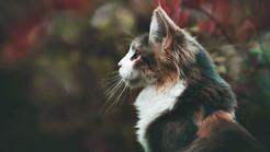Your Feline's Five Senses