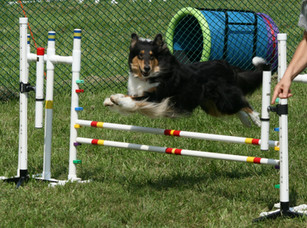 Kenzie playing agility