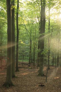 Glücksburger Wald