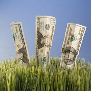 money-grow-300x300.jpg