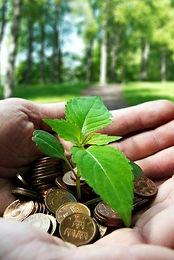 moneychangeplant.jpg
