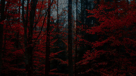 red forest.jpg