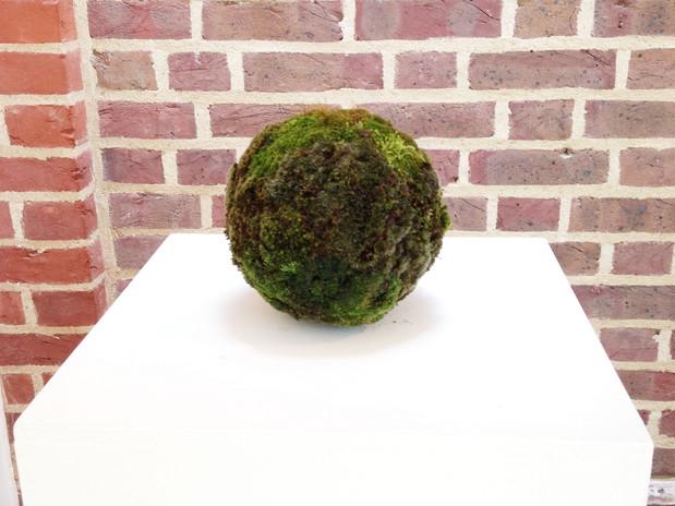 The moss ball - Emi Fujisawa