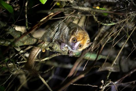 Lemur Park208.jpg