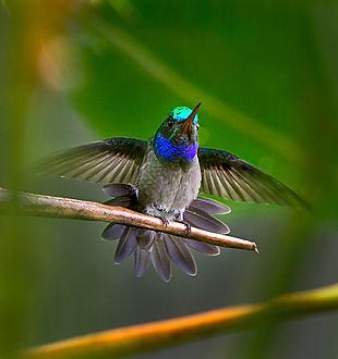 Sirena 37-Portada-Charming Hummingbird.j