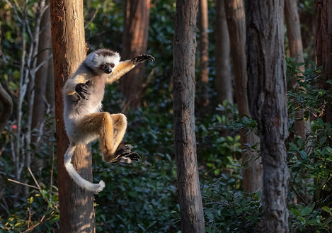 Lemur Park341.jpg