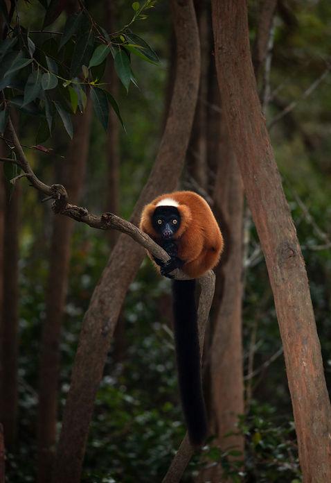Lemur Park129.jpg