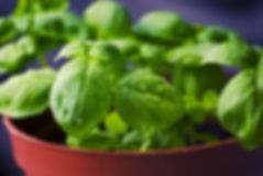 plant based ingredients.jpg