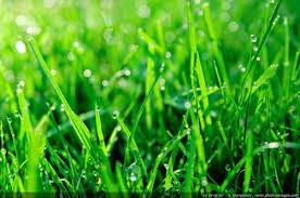 Le brin d'herbe